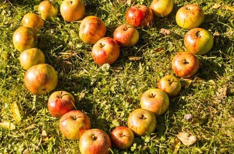 Äpfel als Herz ausgelegt